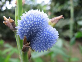 Spiky Blue Flower by Mentasys
