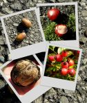 fruits of autumn by Mittelfranke