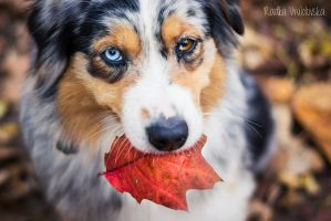 Bits of autumn by aussiefoto