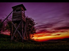 Forester's house by TomekKarol