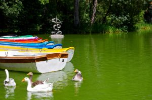 The  duck pond by todto