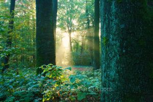 Forest awakening by EliseEnchanted
