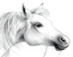 horse drawing by gopidi
