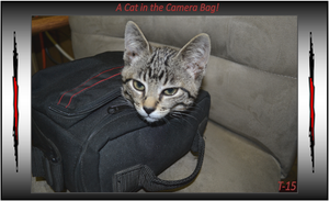 A Cat in the Camera Bag by Taures-15