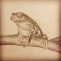 tree frog by Booboobunni