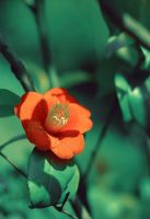 red Flower by dyefish