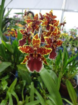 EggFest_Orchids3 by BLuisi
