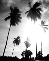 Just palms by irinashouk