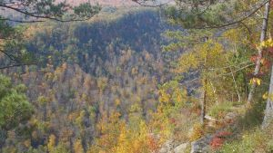 Canyon in Fall 5 by ToshirotheKnightWolf