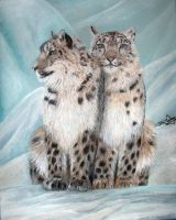 Snow Leopards by BigCats