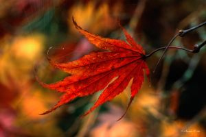 Fall in Flames by UrbanRural-Photo
