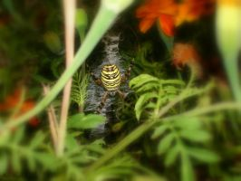 Spider in the Shrub by LenSpirations