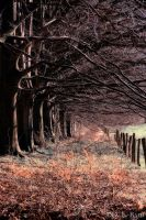 Trees in Netherlands by debahi