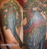 Parrot by Melissa-Capo