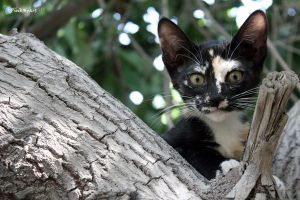 A kitty on the tree 2 by pink-heart