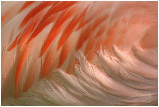 Flamingo feathers by GravityLens