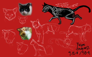 . house cat anatomy study . by ShadowCatsKey