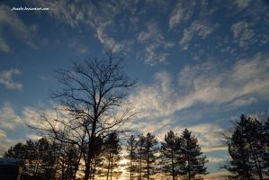 Trees Light And Blue Sky by Aneede