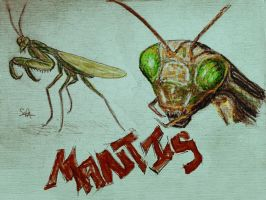 Mantis by Art-Diversity