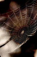 Spider Web by jemapellenicoletta