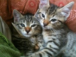 Cats in pile by Donniebellorniere