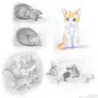 Kittens and Cats (sketches) by Liris-san
