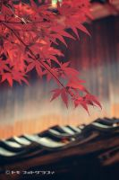 Autumn is coming by WindyLife