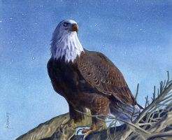 American Bald Eagle by Alanpaints