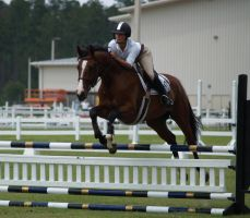 One Perfect Horse by zippostock