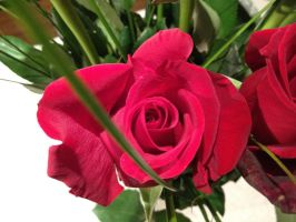 red rose by 1997girl