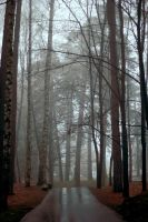 Mist in the Forest XI by NorthernLand