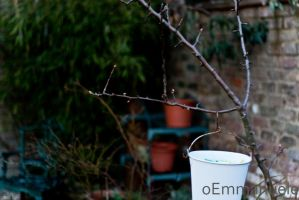 Pegs  hanging on a tree - Day 62 - 03/03/13. by oEmmanuele