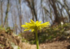 Yellow from below by alazada9855