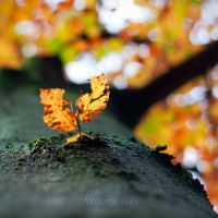 On the side of autumn by WouterPera