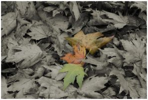 autumn leaves by Claudia008