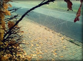 spider net by Shreever