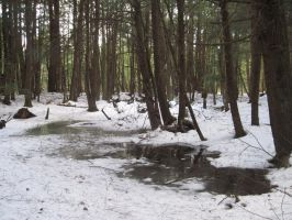 Winter Puddle 1 by Salamander-Stock
