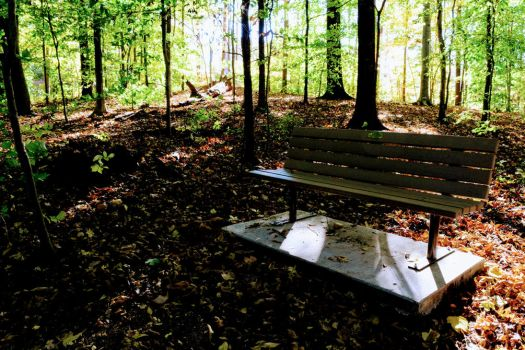 Bench in the Woods by ChaseTwentyThree