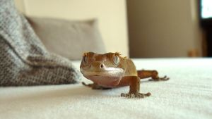 izabella the gecko by raverqueenage