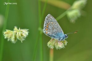 Butterfly VIII by tripping-daisy