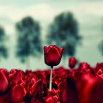 Stand Out by Oer-Wout