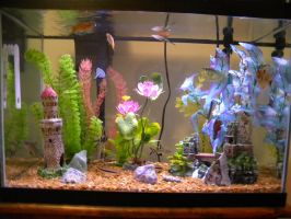 my 20 gal fish tank by ElizzaBeast