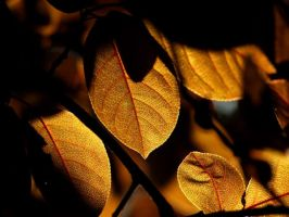 Autumn leaf by krista-perse