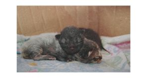 amor by adream-within-adream