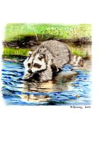 racoon scanned by HendrikHermans