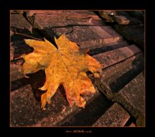 on the roof by ad-shor