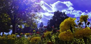 Vibrant Afternoon by kyletilleyphotos