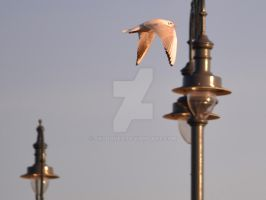 Lamp with gulls around 2 by Skyrover