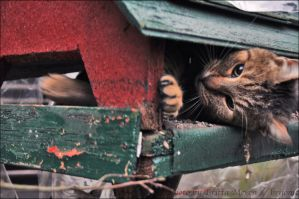In the bird feeder by brijome