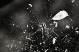spider-aug20-2011 by chirilas